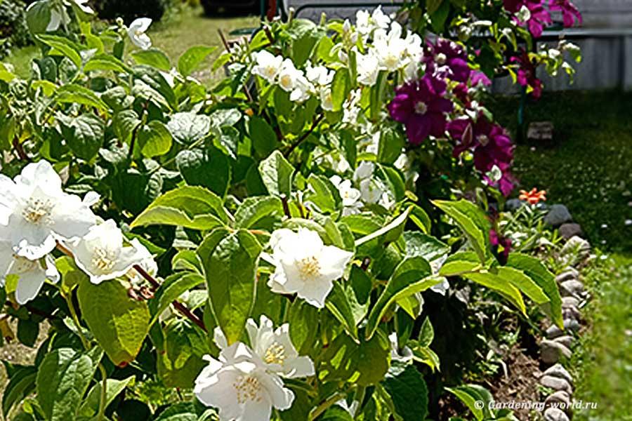 План работ садовода и огородника на июль