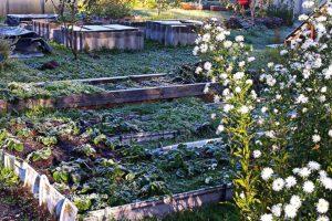 План работ садовода и огородника на ноябрь