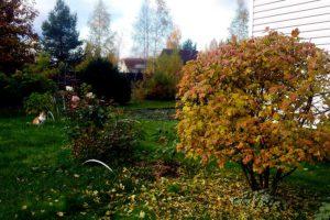 План работ садовода и огородника на октябрь