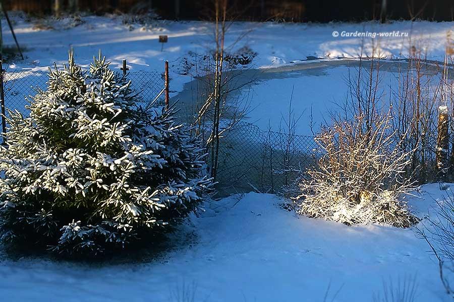 План работ садовода и огородника на январь
