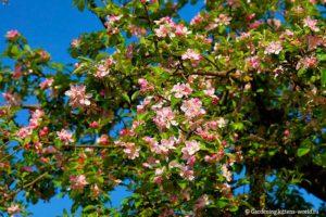 Посадка сада - ошибки начинающего садовода