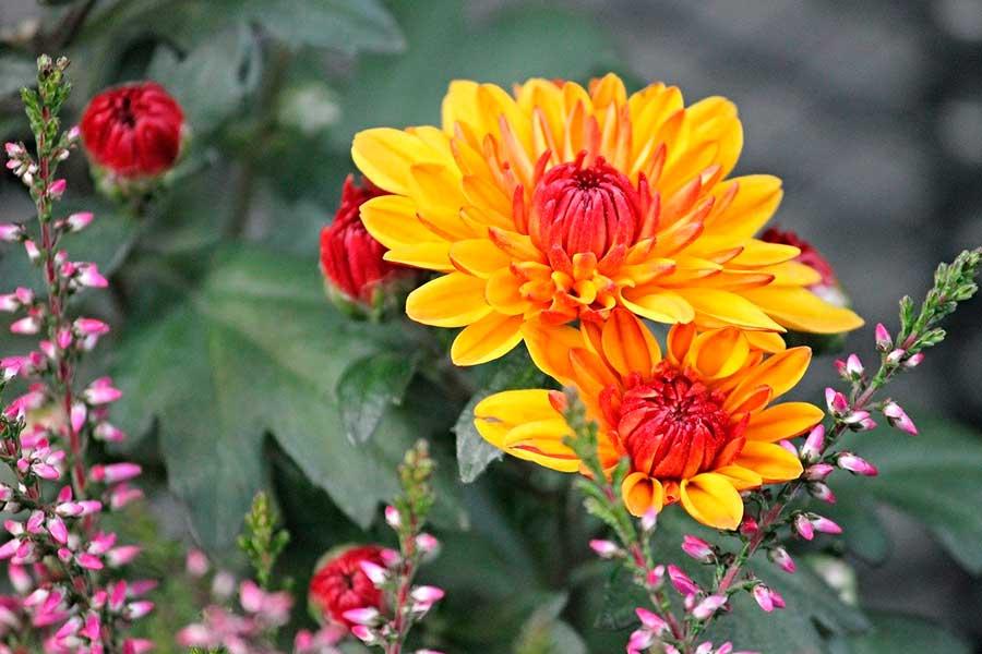 Сад осенью, растения осенних цветников