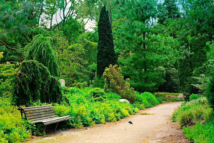 Хвойный сад. Хвойные растения в дизайне