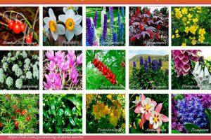 Ядовитые растения в вашем саду