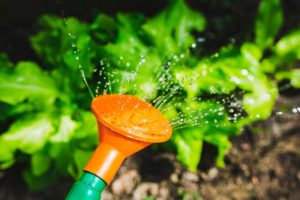 Как поливать овощи и зеленые культуры