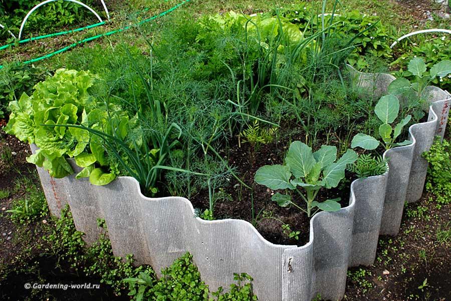 Что посадить на грядке в один квадратный метр