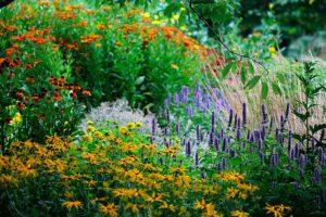 10 ярких растений - многолетники для цветников