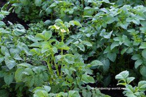 План работ садовода и огородника на июнь