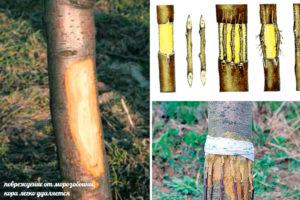 Как сберечь поврежденное дерево
