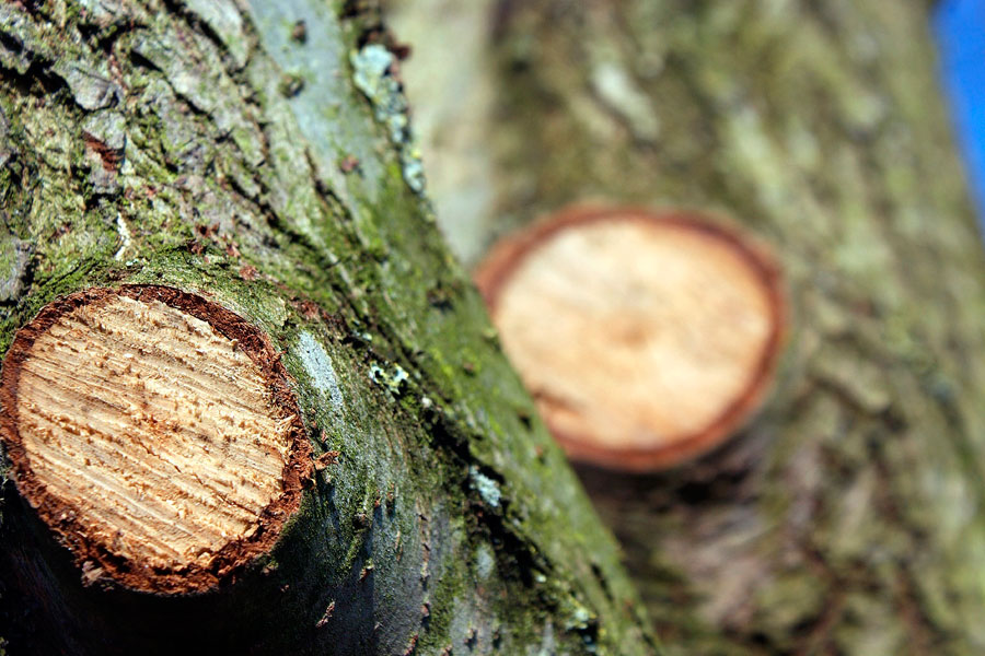 Лечение ран плодовых деревьев