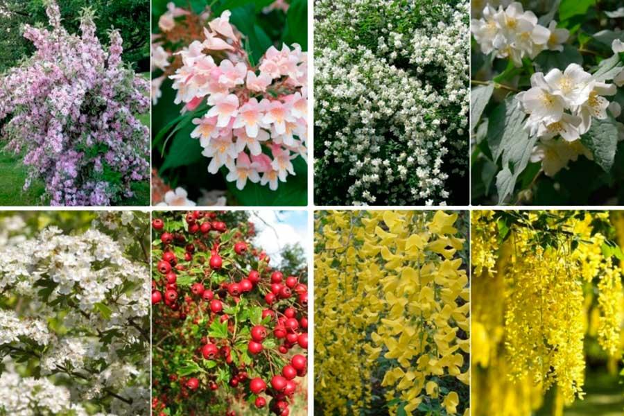 Весенние цветущие декоративные кустарники