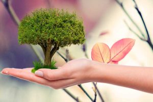 Зоны холодостойкости растений