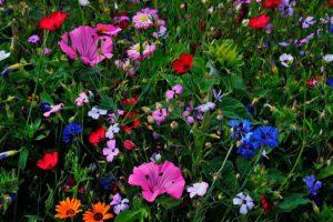 Каким растениям, какая почва подходит