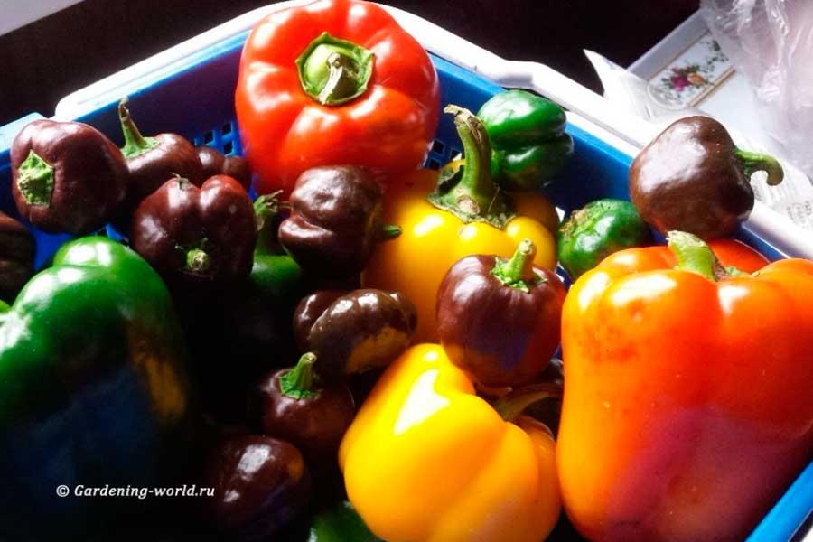 Как вырастить хороший перец + схема формирования перцев