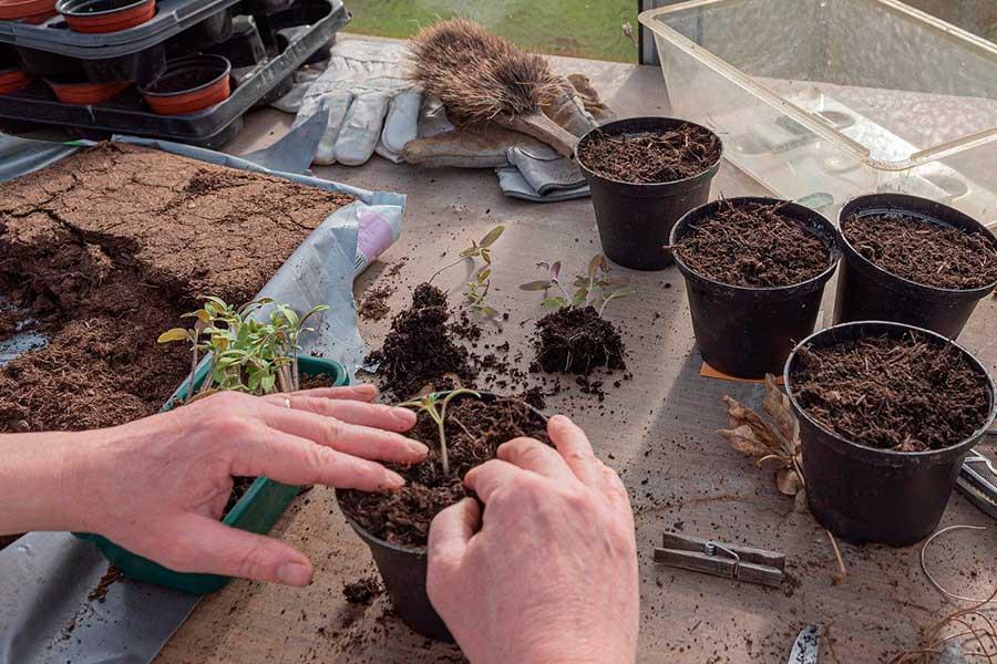 Как определить, когда сажать семена на рассаду