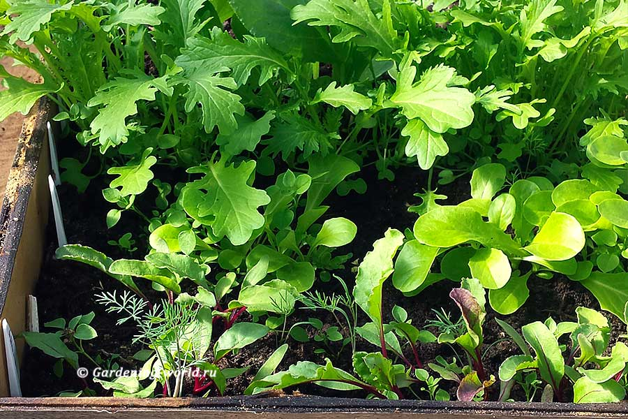 Как сделать посадки ранней весной овощей и зелени в теплицу