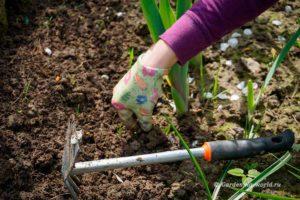 Меры борьбы с сорняками подручными средствами