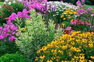 Многолетники из семян - правила выращивания