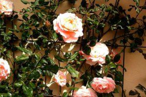 Опора для растений - варианты для вьющихся и других высоких растений