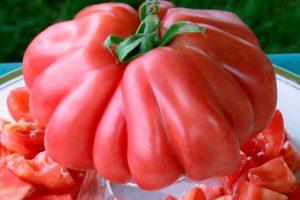 Основные заболевания овощей, таблица