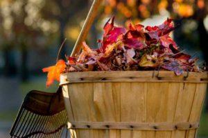 План работ садовода и огородника на сентябрь