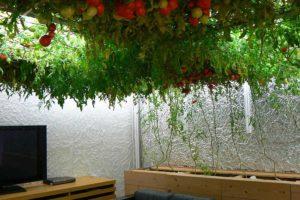 Подземная ферма в Японии Pasona 02