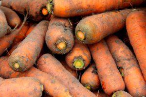 Посадка моркови под зиму, второй способ