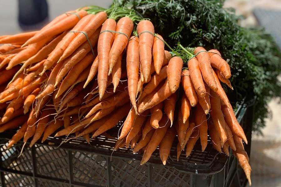 Посадка моркови под зиму, первый способ