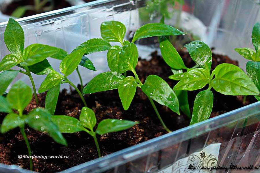 Посадка семян в торфяную таблетку