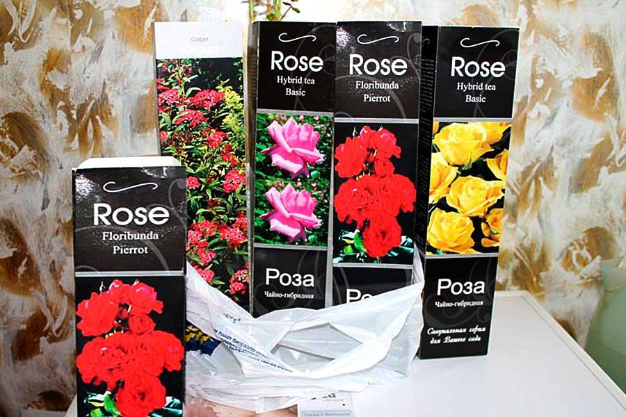 Почему не приживаются розы из красивых картонных коробок