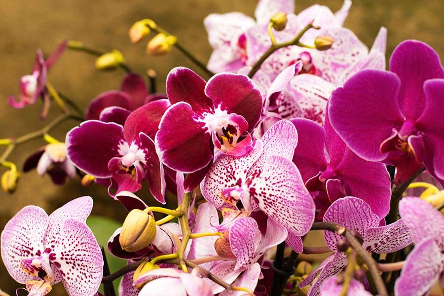 Почему у орхидеи гниют корни