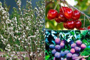 Почему не плодоносят деревья, которые хорошо цветут
