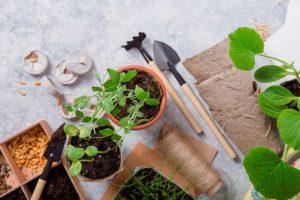 Проращивание семян огурцов за два дня