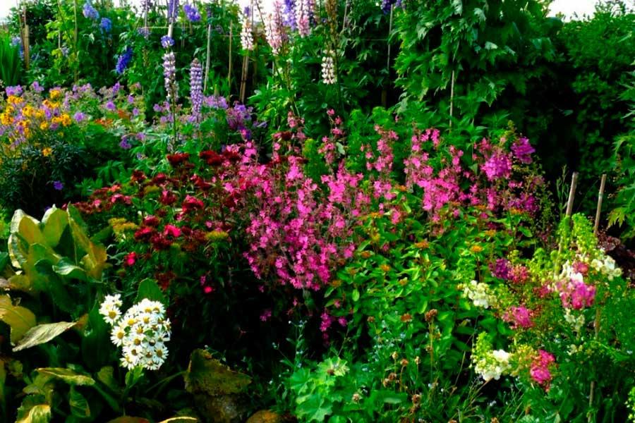 Растения для влажных мест