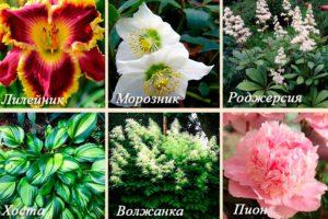 Растения долгожители