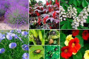 Растения против вредителей, таблица