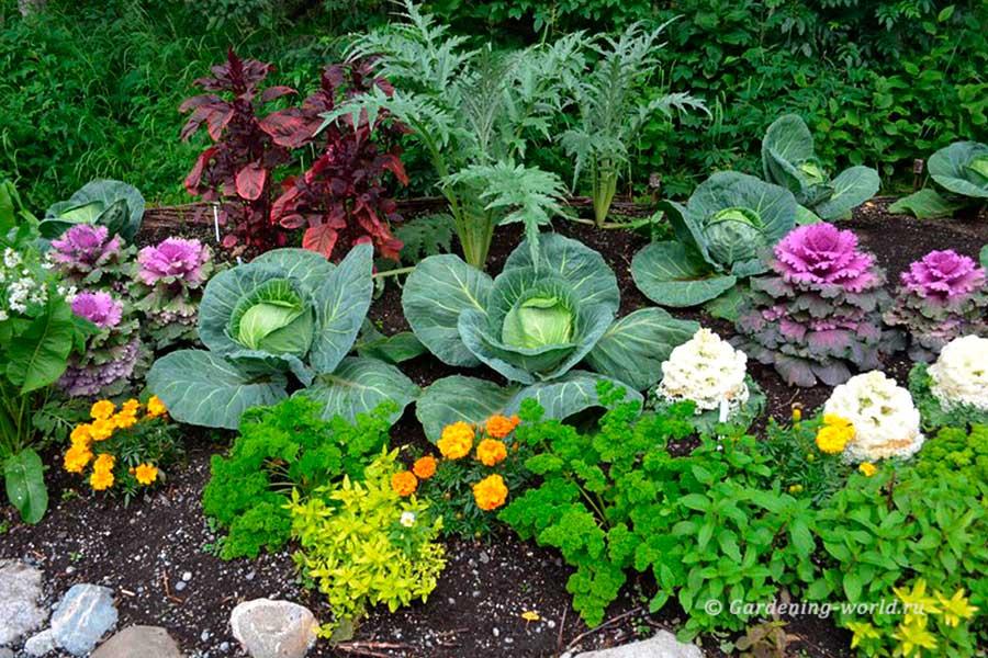 Смешанные посадки овощей на грядке
