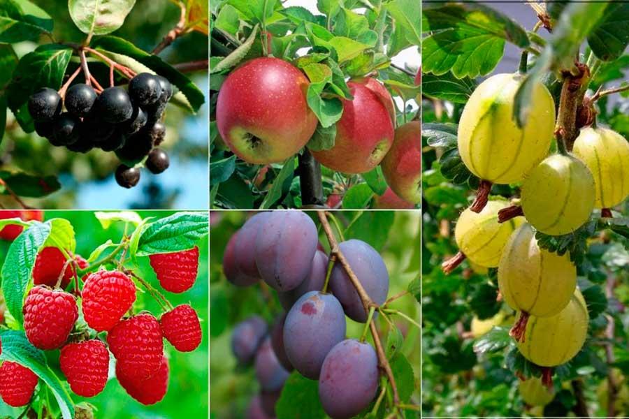 Смешанные посадки плодовых деревьев и ягодных кустарников