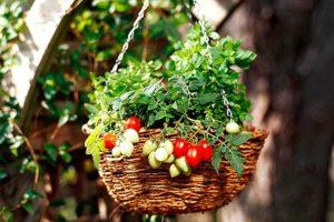 Совместное выращивание овощей и цветов в контейнере