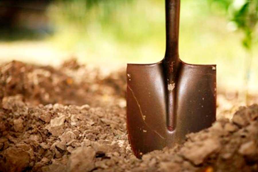 Способы определения кислотности почвы самостоятельно