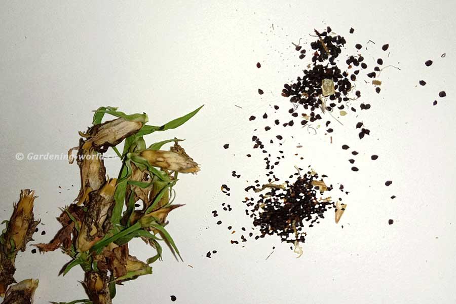 Способы посадки мелких семян
