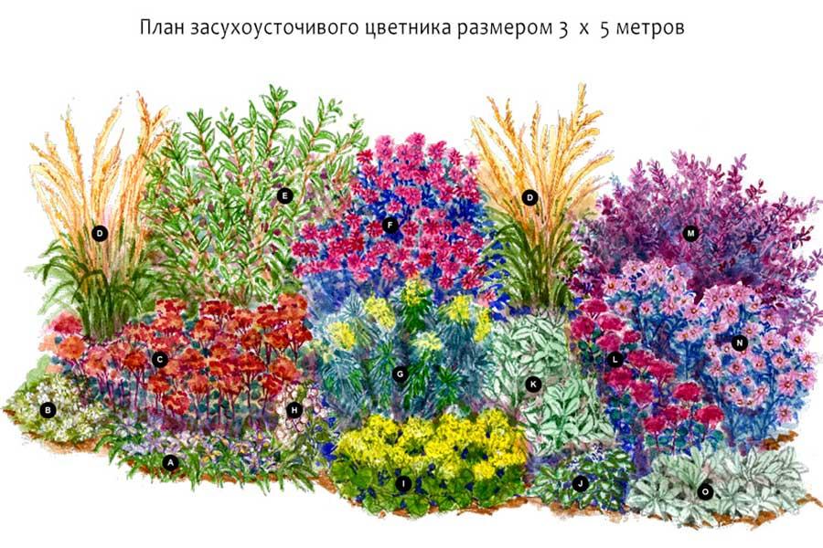 Схема цветника из засухоустойчивых растений