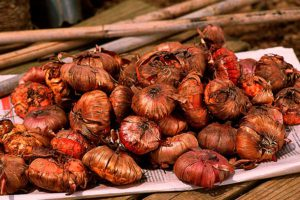 Хранение луковиц зимой - проверяем и лечим