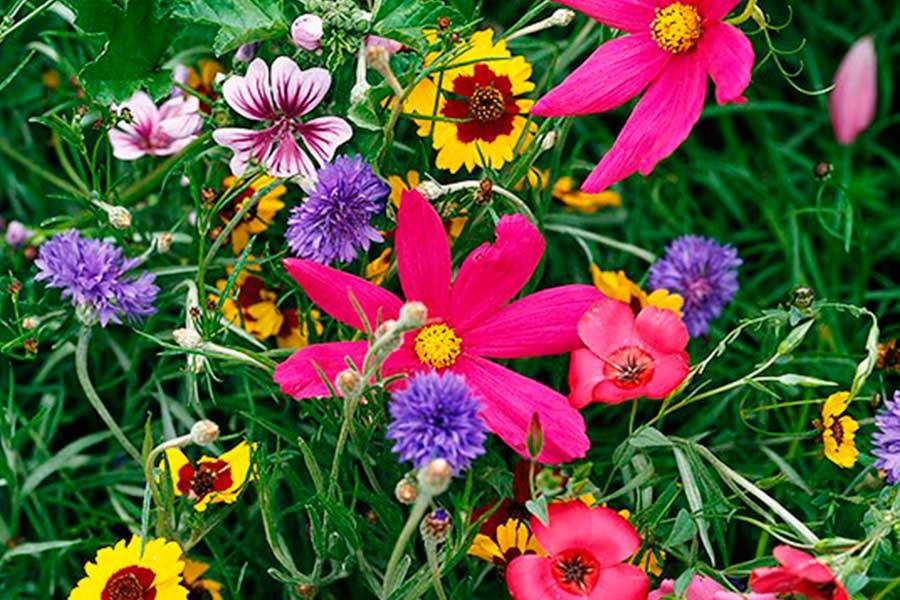 Яркие цветы в саду - лучшие советы