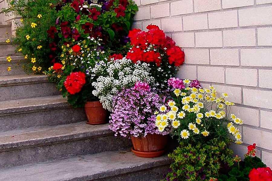 7 правил выращивания растений в контейнерах