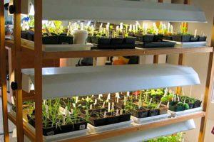Какие 10 растений посеять в январе