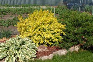 Декоративные растения для сада: