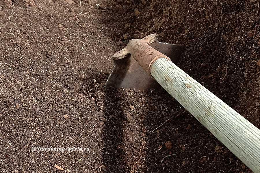 Лучшая почва для рассады — готовим ее осенью